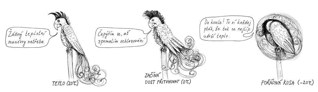 29-papousek-ilustrace_1024.jpg